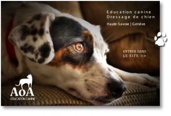 AoA - éducation canine